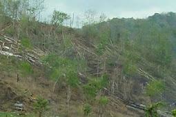 BKPH Toffo Pajo Sebut Kerusakan Hutan di Dompu Semakin Parah