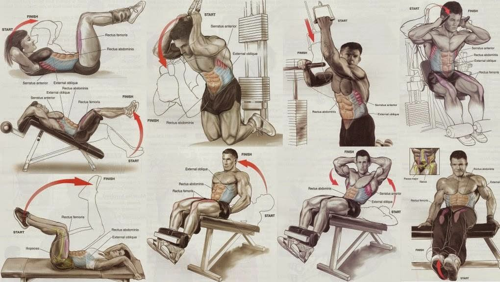 Abs Exercises for Men and Women - all-bodybuilding.com