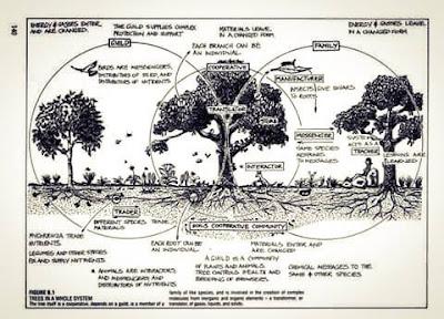 Bosques Comestibles de Diego Luis López