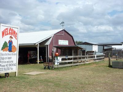 Elgin Christmas Tree Farm in Elgin, Texas