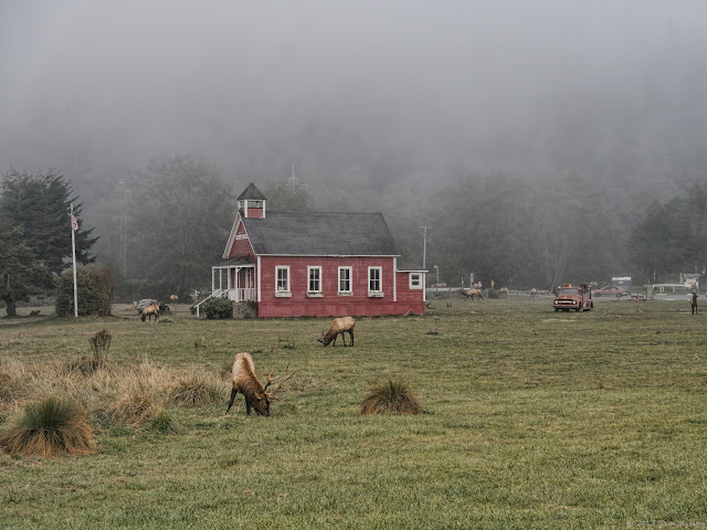Elk around schoolhouse