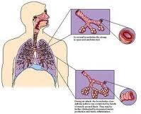 Suplemen untuk Penyakit Paru Paru