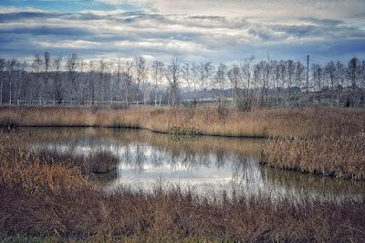Vista de l'estany de Sils