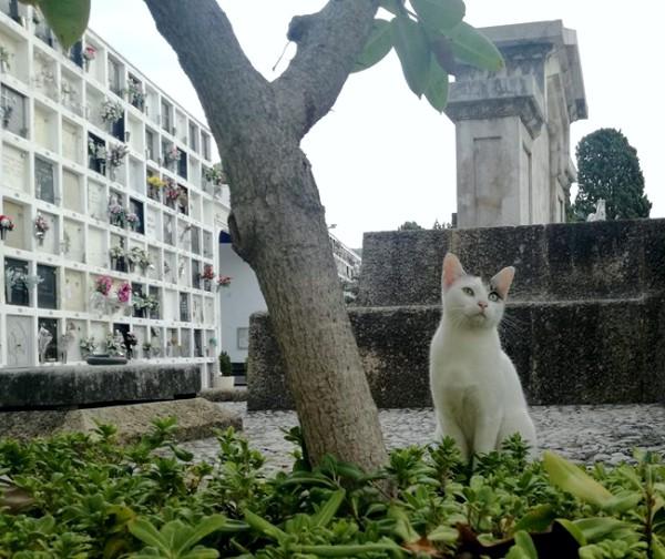 catalonia cemetery