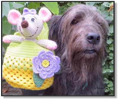 Hund und Beutelratte