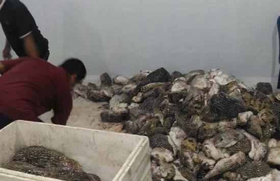 Cold Storage TPI Bonehalang, Adalah Solusi Terjaganya Kwalitas Ikan