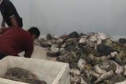 Cold Storage TPI Bonehalang Adalah Solusi Terjaganya Kwalitas Ikan