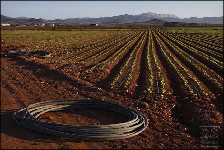fotografia,cultivo,murcia,campo,tuberia,riego,goteo,paisaje