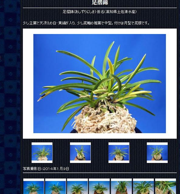 http://www.fuuran.jp/jiman_asizurinisiki.html#%E8%B6%B3%E6%91%BA%E9%8C%A6%E3%81%AE%E8%A9%B3%E7%B4%B0