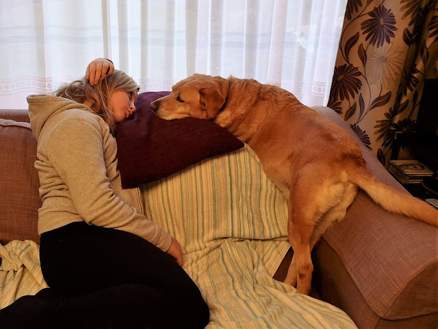 Golden labrador and tween