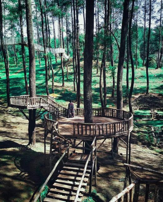Menikmati Hutan Pinus di Orchid Forest Cikole, Serasa Di film Twilight