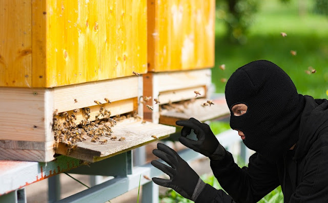 Κλοπή μελισσσιών στην Νιγρίτα Σερρών