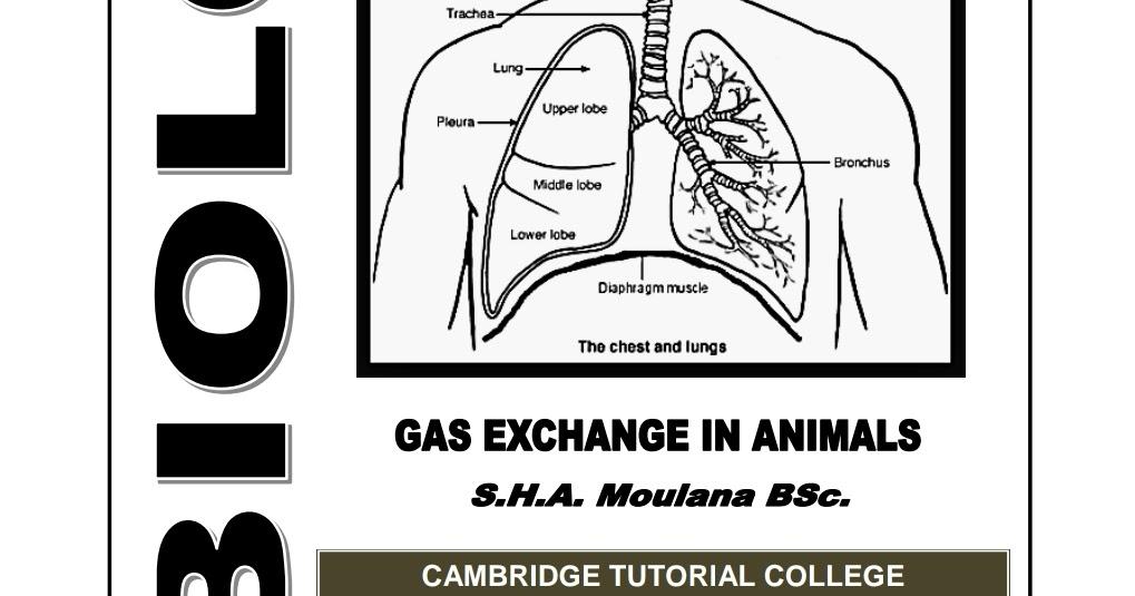 BIOLOGY_UNIT-05 NEW UPDATES GAS EXCHANGE IN ANIMALS By: S