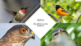 January 1 Program: Our Birds in the Tropics