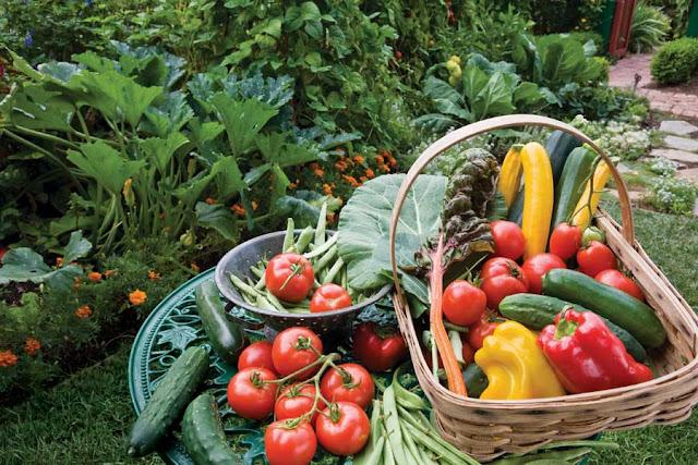 Organic gardening - Harvest basket