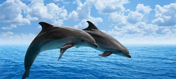 Fakta menarik tentang dolphin yang patut tahu serta peluang melancong ke gold coast