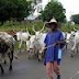 Herdsman Sentenced To Two Years Imprisonment In Ekiti