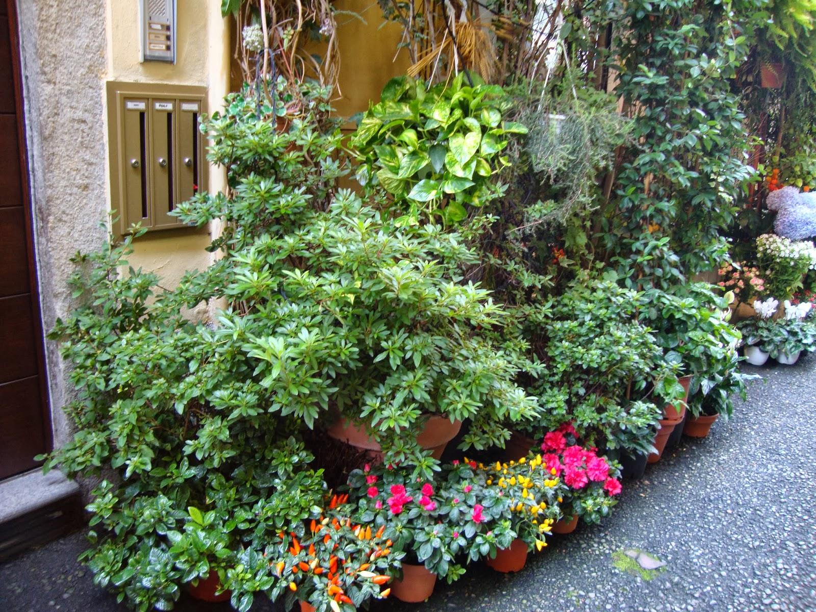 Un piccolo giardino in citt la fioraia di monza for Piante da interno piccole