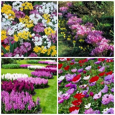 Cebule kwiatowe do nasadzeń jesiennych. Co sadzimy jesienią?