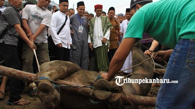 Koalisi Prabowo - Sandi Ingin Ustadz Somad Masuk Struktur Tim Pemenangan