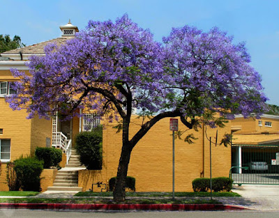 The Color Purple - Jacaranda & Eggplant Hummus