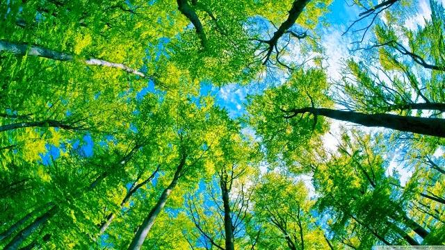 تحميل صور خلفيات مناظر طبيعية عالية الجودة Hd
