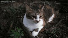 Kucing Sering Menjadi Mangsa Kekejaman Manusia Tidak Berhati Perut