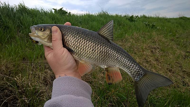 Feh rv ri domolyk vad sz bred domolyk k for Your inner fish summary