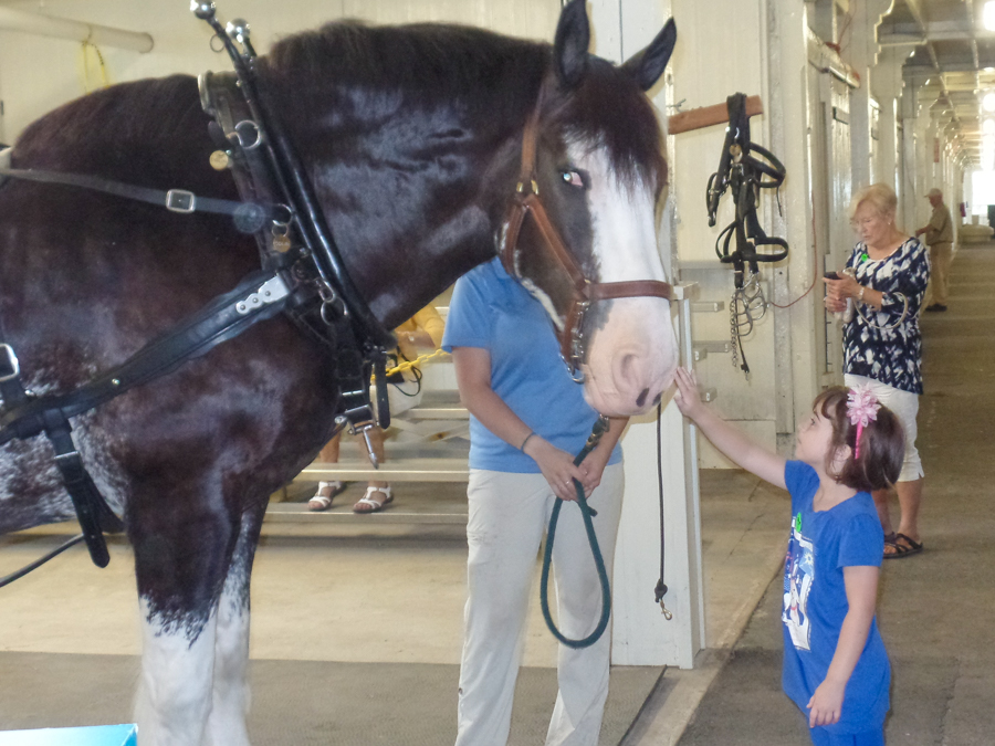 Young at Heart Ministry: Kentucky Horse Park Day Trip - August 19