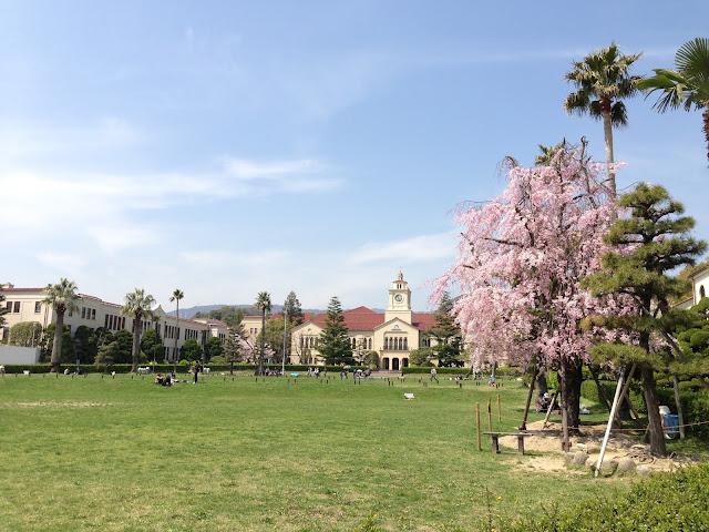 桜の関西学院