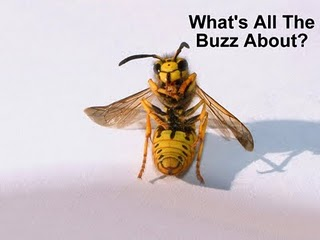 Funny Bee Images Funny Animal