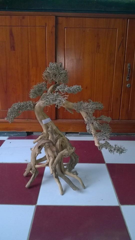lũa bonsai giá cả phải chăng cho hồ thủy sinh thêm đa dạng