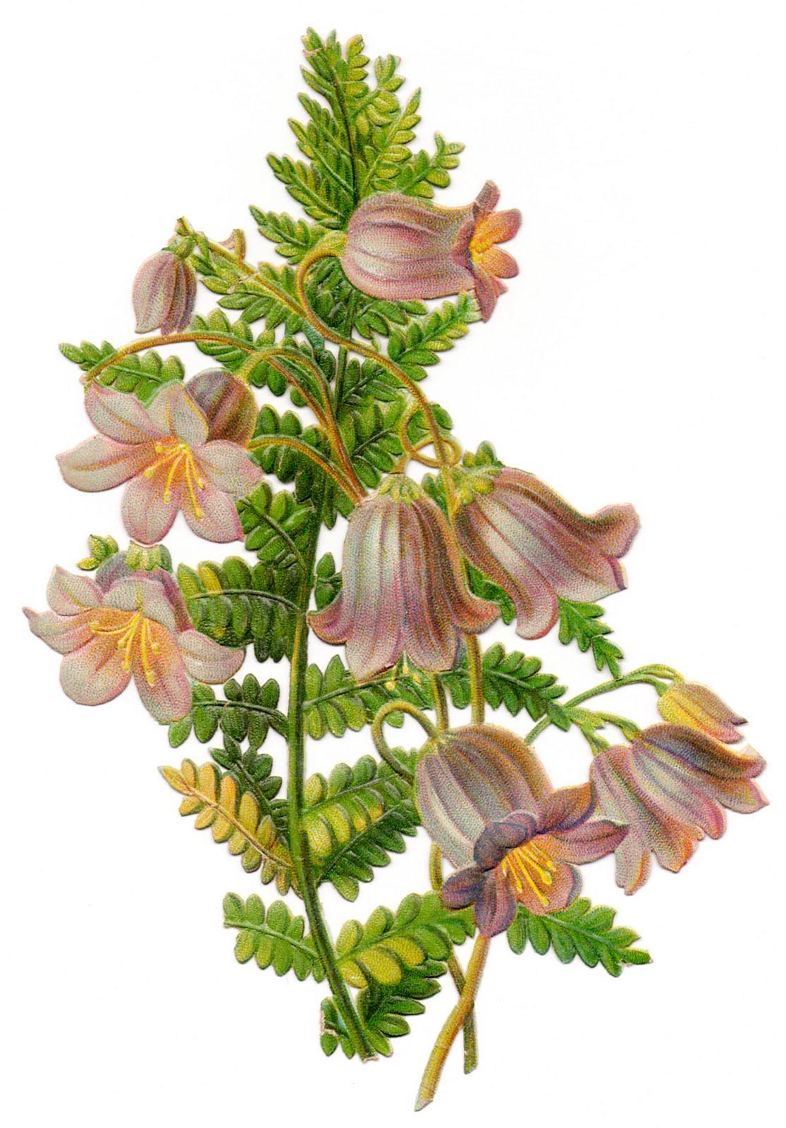 The Vintage Moth..: Vintage Clip Art- Flowers