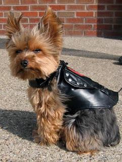 motociclista- cãozinho