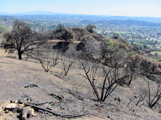 View south from Glendora Mountain Road at Colby Fire damage on Colby Trail in Glendora