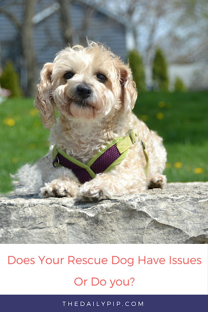 Does your rescue dog have issues or dog you - the ultimate quiz