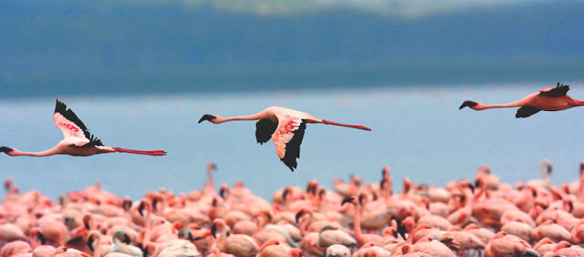 https://travellindia24.blogspot.com/2019/02/nalsarovar-bird-sanctuary.html