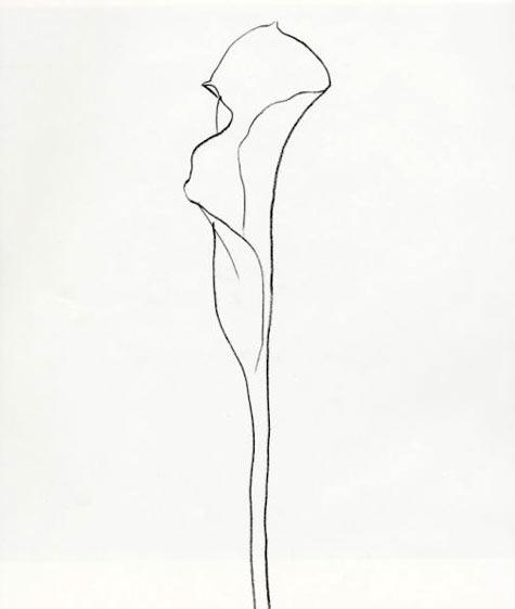 Inky Leaves Ellsworth Kellys Plant Drawings