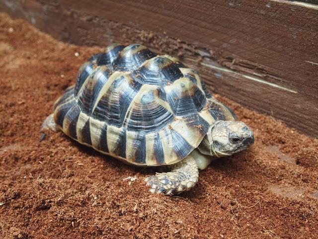 Godstone Farm, Surrey Review - tortoise