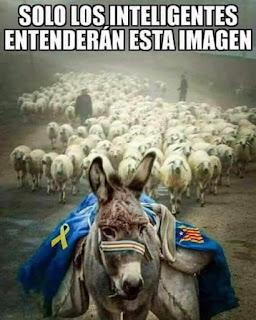 Ase català, ovelles, burro, ovejas