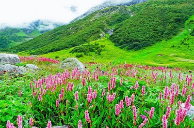 Stunningly beautiful view of Valley of Flowers
