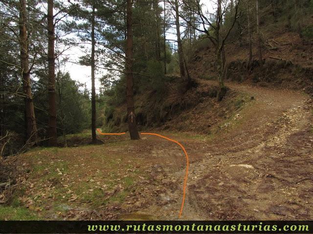 Cruce de pistas forestales