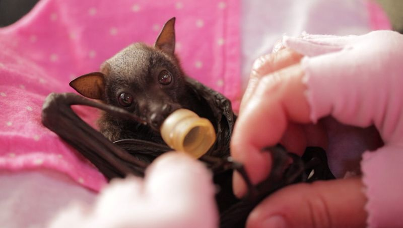Baby Animals: Bat - Pup 16