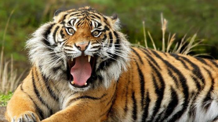 Ini Kebun Binatang Paling Berbahaya di Dunia, Berani Masuk?