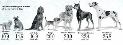 Los perros viven ahora más tiempo