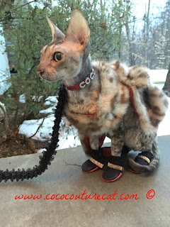 Coco the Cornish Rex in Faux Fur Capelet and PoochieBoots