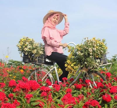 Harga Tiket Masuk Wisata Kebun Bunga Jogja Terbaru
