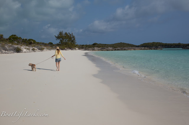 Dog on Moss Cay beach, Exumas, Bahamas