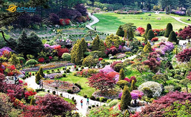 Khám phá lễ hội hoa xuân ở Hàn Quốc1