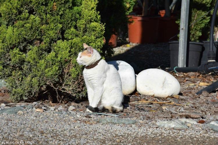 Gata blanca sentada y con ojos cerrados
